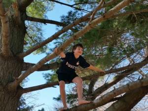 Treinen kid in a tree