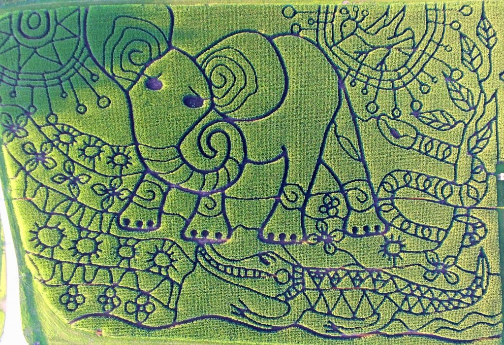2018 Treinen Farm Corn Maze The Elephant's Child