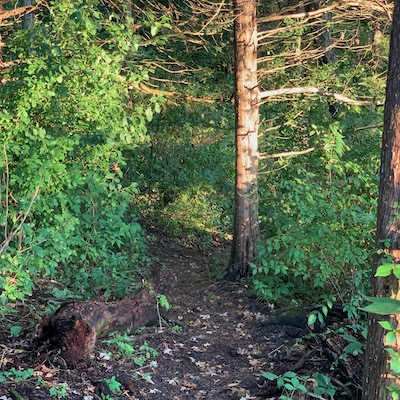 Fairy Woods Trail