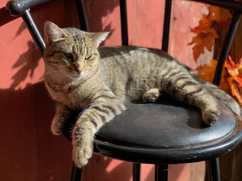 Cat at Treinen Farm