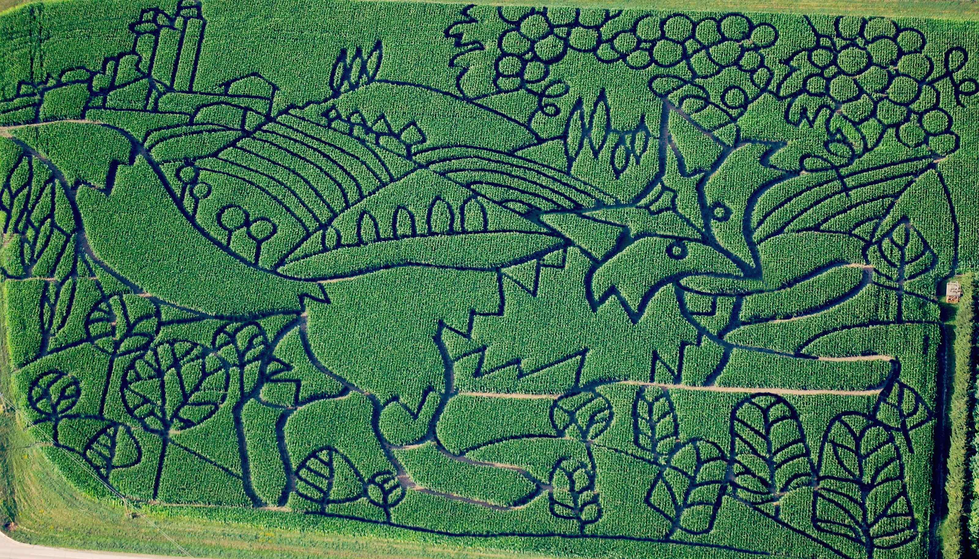 2015 maze treinen farm corn maze pumpkin patch