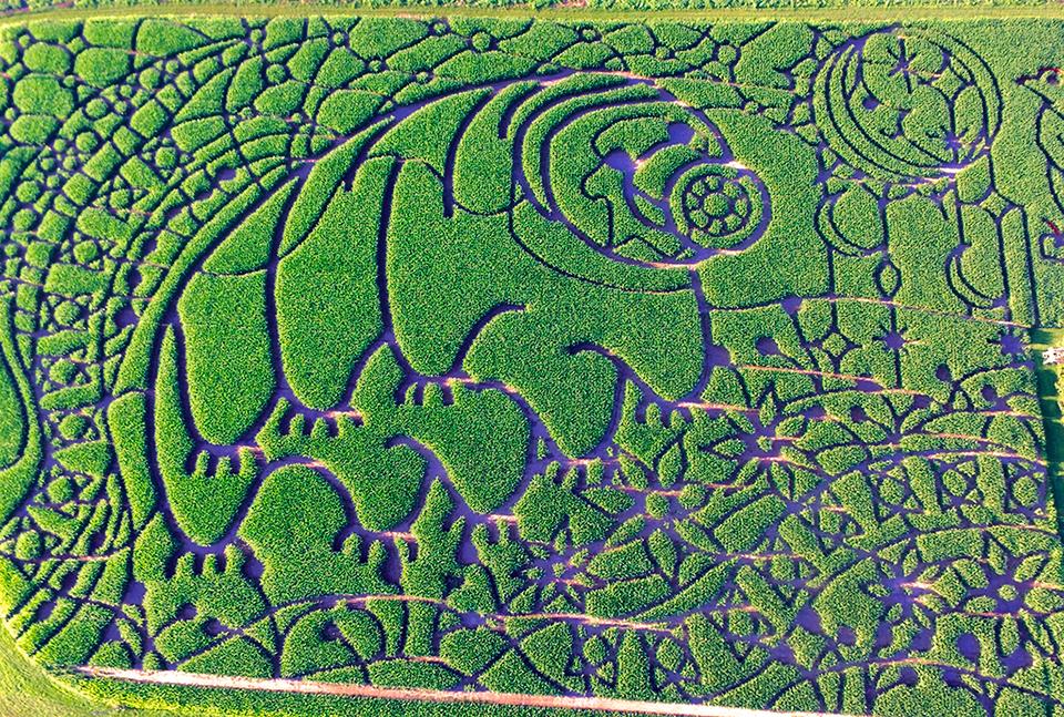 Water Bear Maze