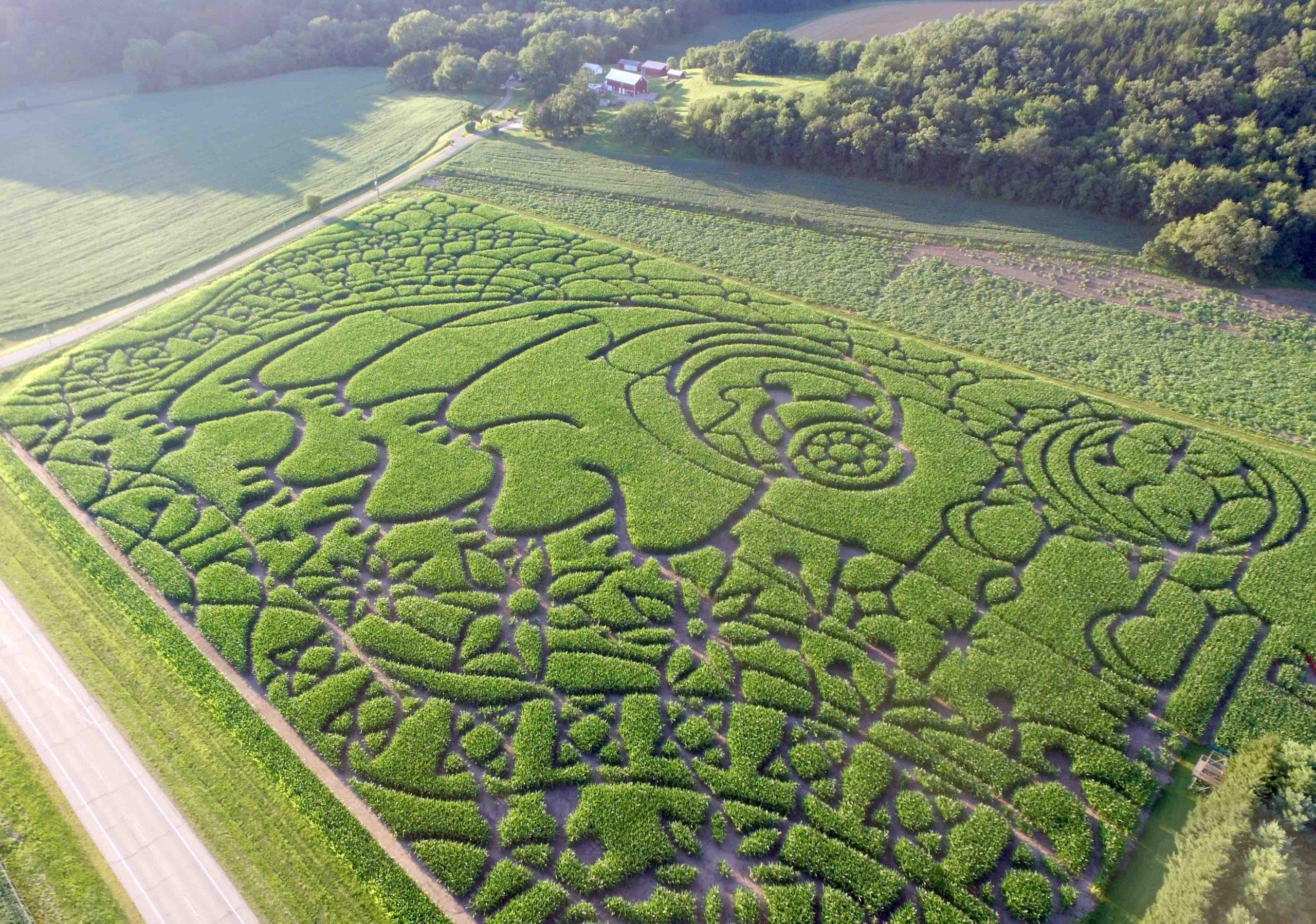 Water Bear Corn Maze