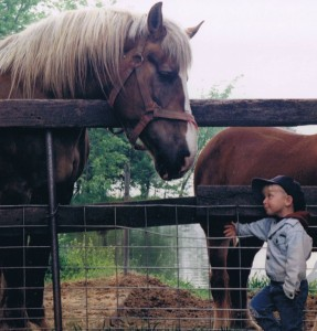 Little Kid with Draft Horse