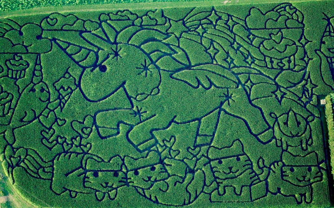 Our maze featured on the Smithsonian's website