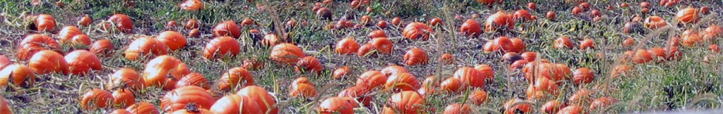 pumpkin-patch-wide-1-(stock)