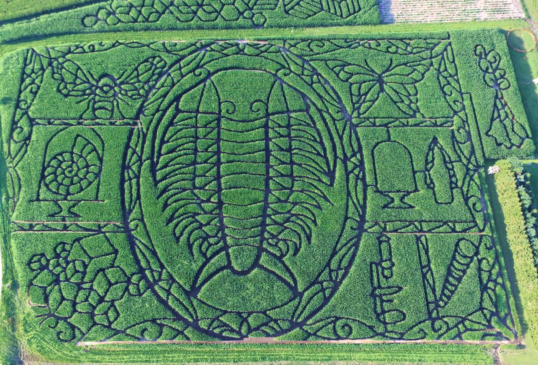 2017 maze treinen farm corn maze pumpkin patch